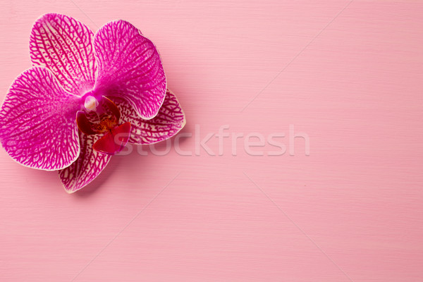 Spa orchid. Stock photo © gitusik