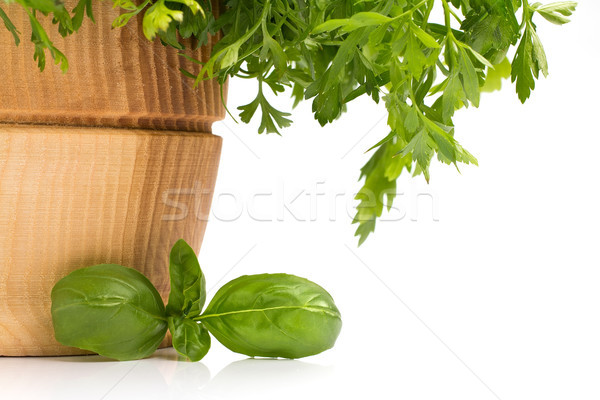 Albahaca aislado blanco naturaleza hoja planta Foto stock © gitusik