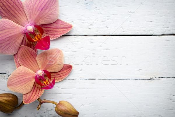 Rosa orquídea flor saudação fundo beleza Foto stock © gitusik
