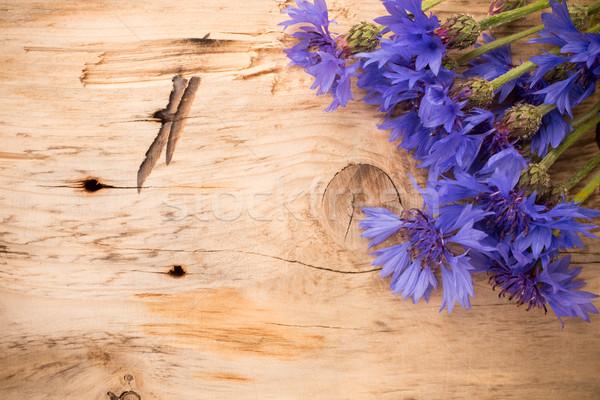 василек студию фотографии Эко цветы Сток-фото © gitusik