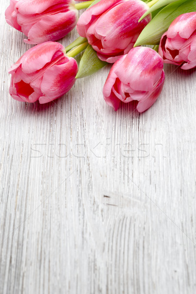 チューリップ ピンク 木製 花 花 木材 ストックフォト © gitusik