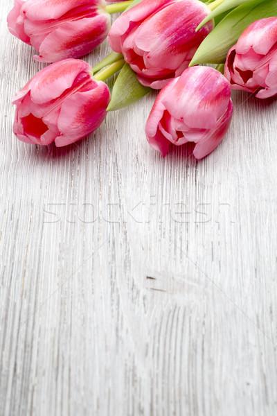 Tulips. Stock photo © gitusik