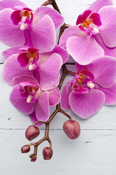 Roz · orhidee · floare · felicitare · fundal · frumuseţe - imagine ...