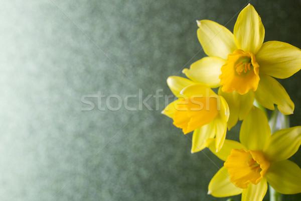 Nárciszok citromsárga színes húsvét üdvözlőlap virág Stock fotó © gitusik