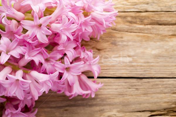 Hyacint roze houten tafel groene hoofd plant Stockfoto © gitusik