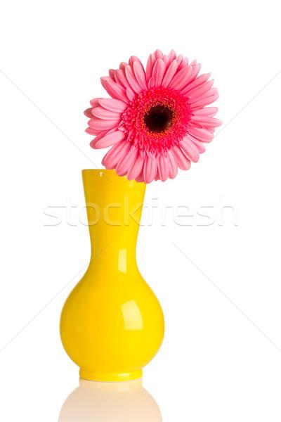 Pink gerbera. Stock photo © gitusik