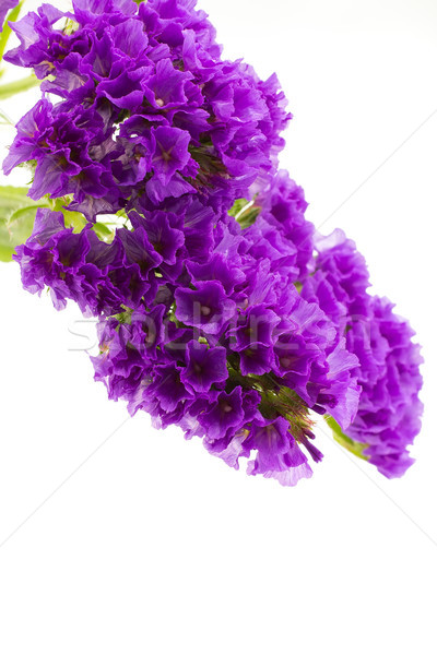Flowers. Stock photo © gitusik