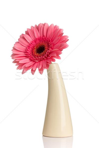 Vazo yalıtılmış çiçekler bahar dizayn enerji Stok fotoğraf © gitusik