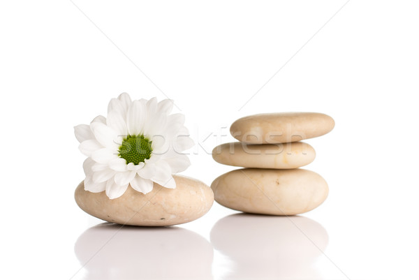 Spa piedras flores aislado blanco resumen Foto stock © gitusik