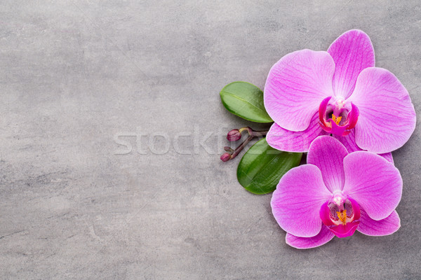 Pink orchid on the grey background. Stock photo © gitusik