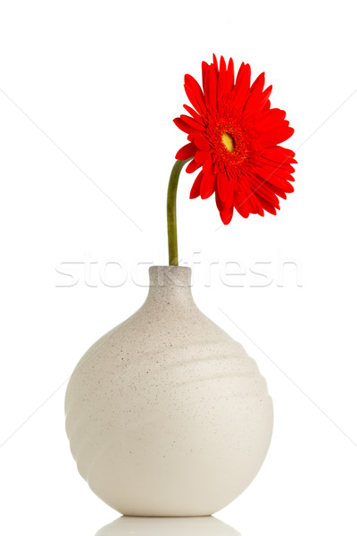 Gerbera. Stock photo © gitusik
