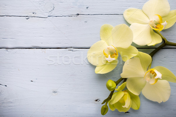 Orchid flower.  Stock photo © gitusik