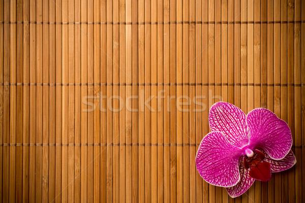 蘭 ピンク 花 まゆ 色 スタジオ ストックフォト © gitusik