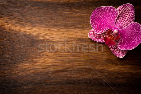 Orchidea rózsaszín virág hegyorom színek stúdió Stock fotó © gitusik
