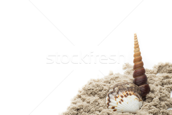 Scallop isolated on the white background. Stock photo © gitusik