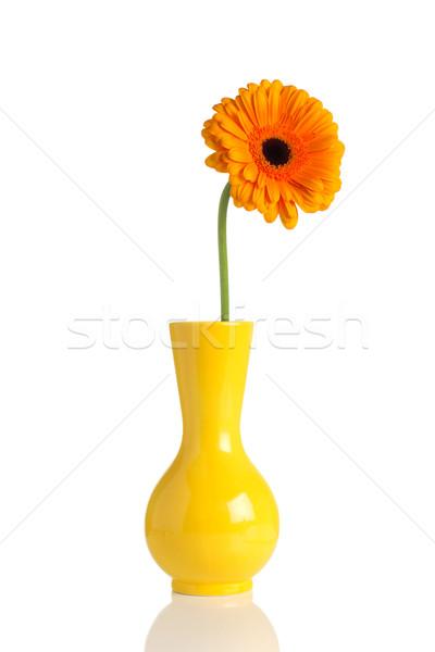 花 花瓶 孤立した 白 春 デザイン ストックフォト © gitusik