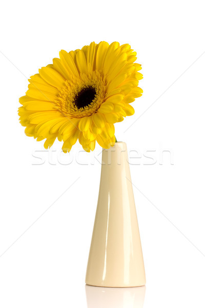 Sarı vazo yalıtılmış beyaz çiçek çiçekler Stok fotoğraf © gitusik