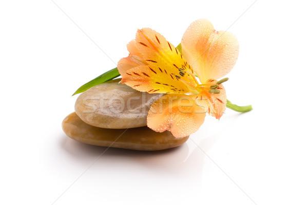 Estância termal pedras laranja flor isolado branco Foto stock © gitusik