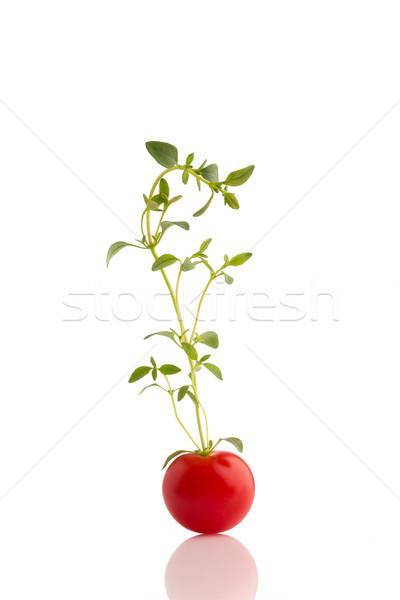 Kiraz yalıtılmış beyaz gıda arka plan grup Stok fotoğraf © gitusik