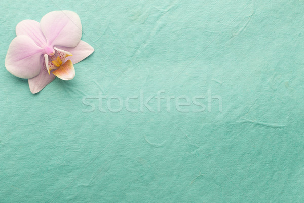 Pink orchid. Stock photo © gitusik