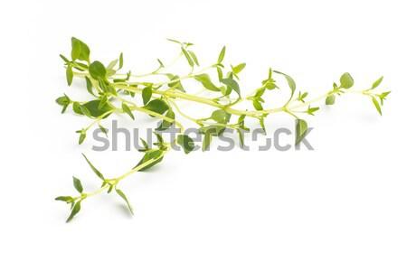 Thyme. Stock photo © gitusik