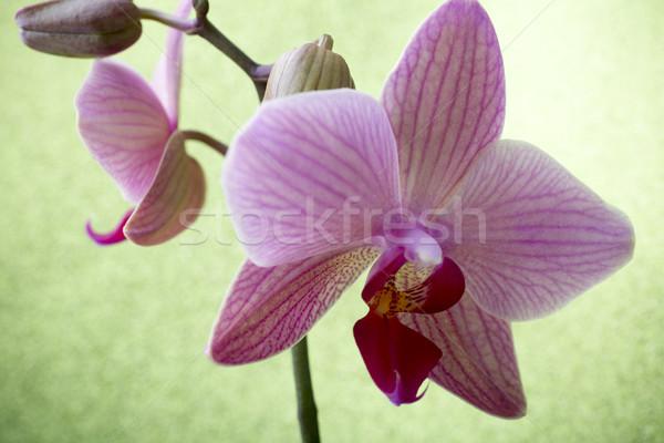 Pembe orkide renkli tebrik kartı arka plan güzellik Stok fotoğraf © gitusik