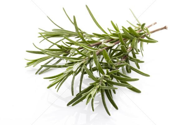 Alecrim galho isolado branco folha verde Foto stock © gitusik