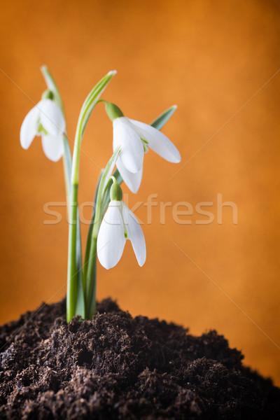 Sol printemps beauté blanche horizons Photo stock © gitusik