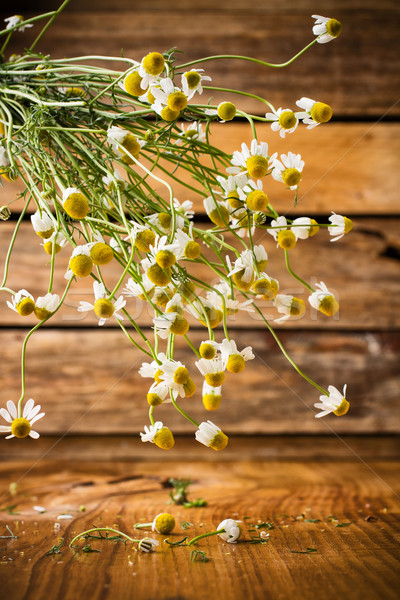 Chamomile. Stock photo © gitusik