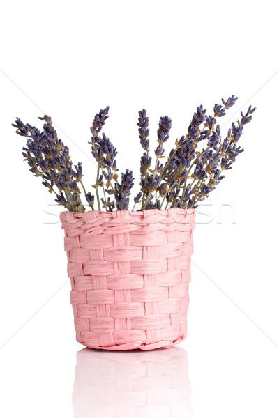Lavender. Stock photo © gitusik