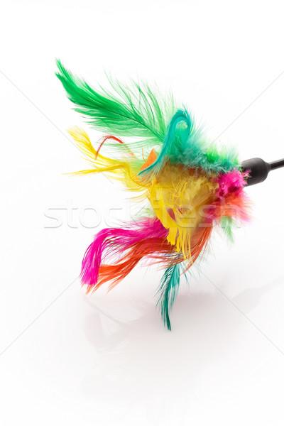 Pet toy.  Stock photo © gitusik