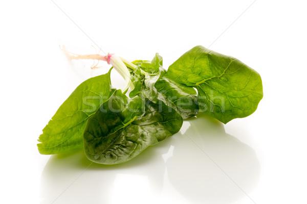 Spenót gyökerek fehér levél növény zöldségek Stock fotó © gitusik