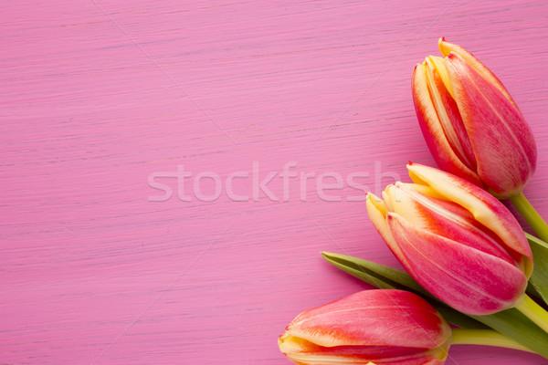 Tulipan tulipany powierzchnia studio fotografii Zdjęcia stock © gitusik