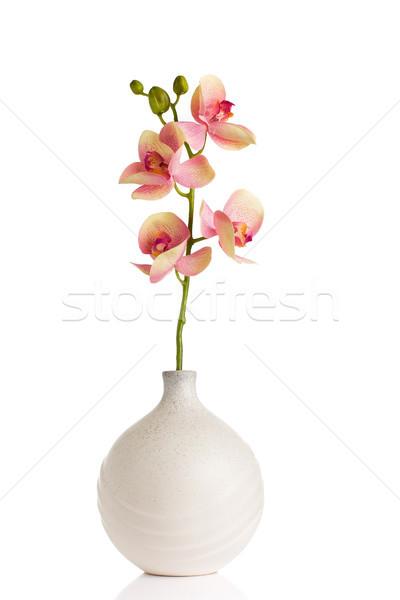 изолированный белый весны дизайна энергии Сток-фото © gitusik