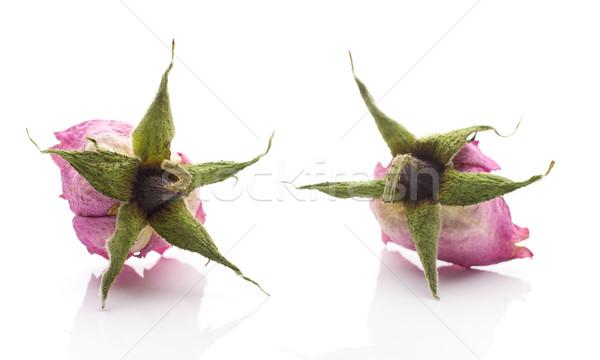 Kurutulmuş gül kuru pembe çiçek yalıtılmış beyaz Stok fotoğraf © gitusik