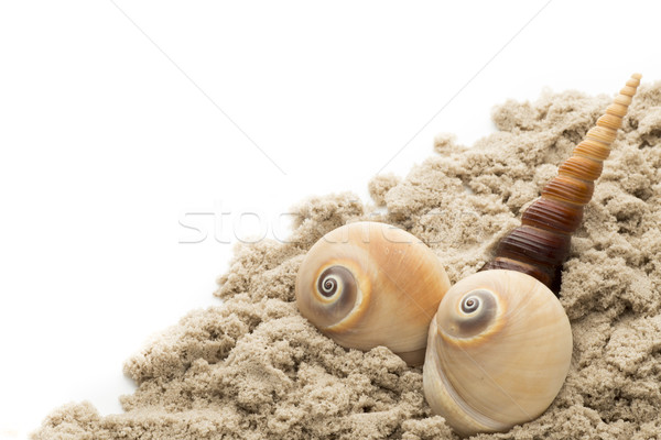 Stock photo:  Scallop isolated on the white background.