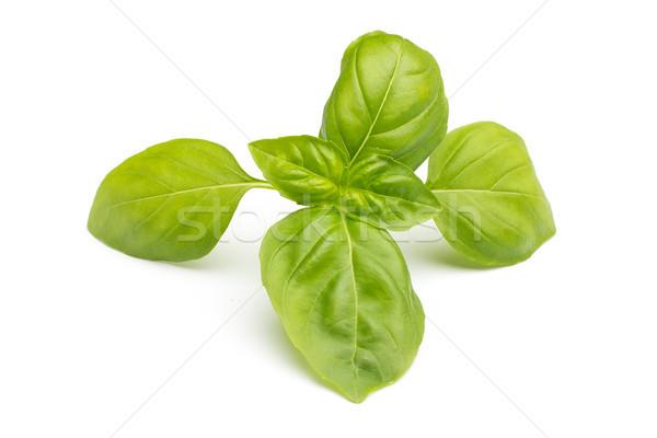 Bazsalikom izolált fehér zöld zöldségek eszik Stock fotó © gitusik