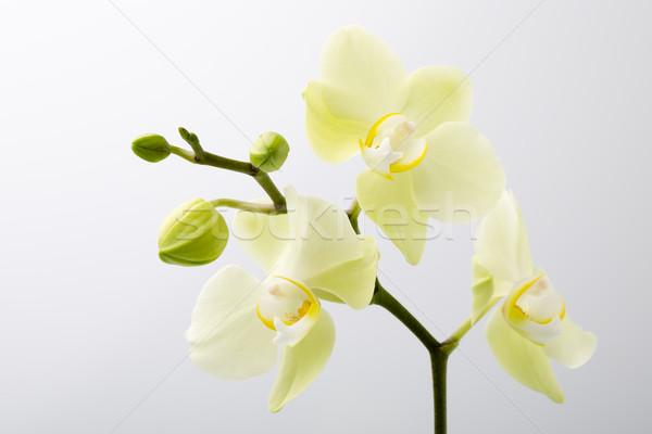 Orchidea fiore legno sfondo bellezza spa Foto d'archivio © gitusik
