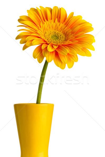 花瓶 孤立した 白 花 春 デザイン ストックフォト © gitusik
