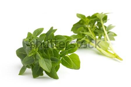 Basil. Stock photo © gitusik