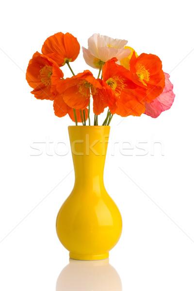 Papoula vaso branco flores casa Foto stock © gitusik