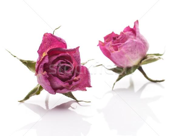 Essiccati rosa asciugare fiore rosa isolato bianco Foto d'archivio © gitusik