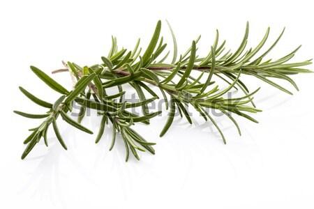 Rozmaring gally izolált fehér levél zöld Stock fotó © gitusik