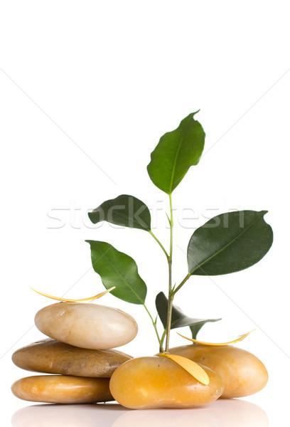Estância termal pedras folha verde isolado branco abstrato Foto stock © gitusik