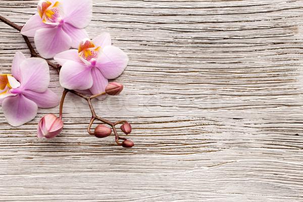Orchidea rosa legno legno abstract salute Foto d'archivio © gitusik