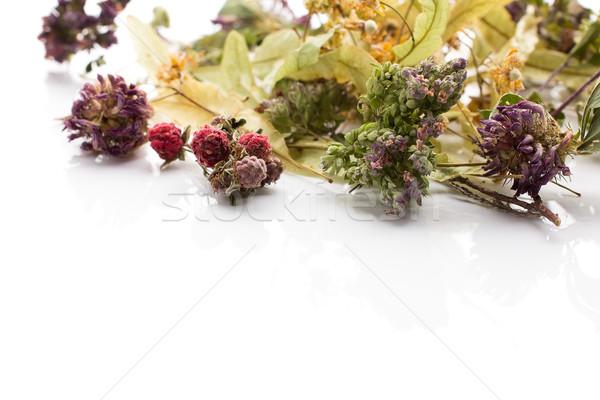 Bitkisel çaylar kuru yalıtılmış beyaz çiçek çim Stok fotoğraf © gitusik