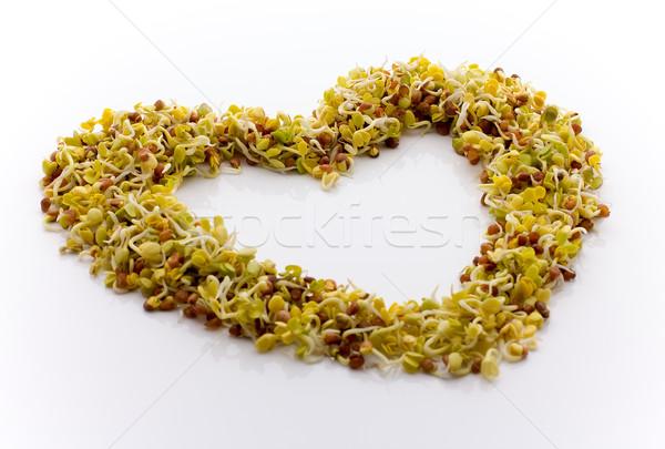 Fresh alfalfa sprouts. Stock photo © gitusik