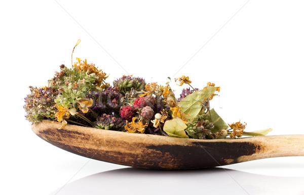 Chá medicinal secar colher isolado branco flor Foto stock © gitusik