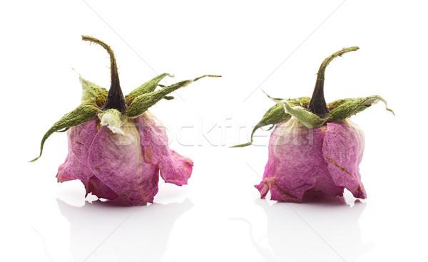 Stock fotó: Aszalt · rózsa · száraz · rózsaszín · virág · izolált · fehér