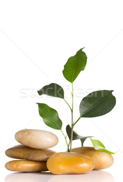 Spa kamienie zielony liść odizolowany biały streszczenie Zdjęcia stock © gitusik